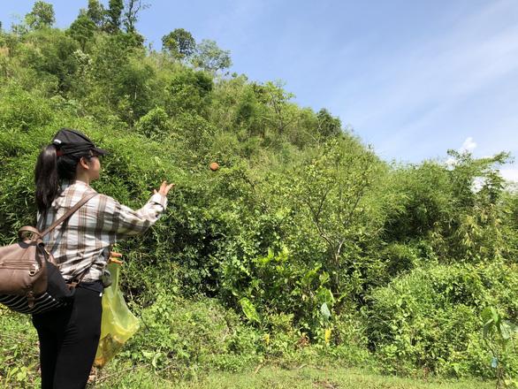In Vietnam's Central Highlands, 'bombs' revive deforested hills