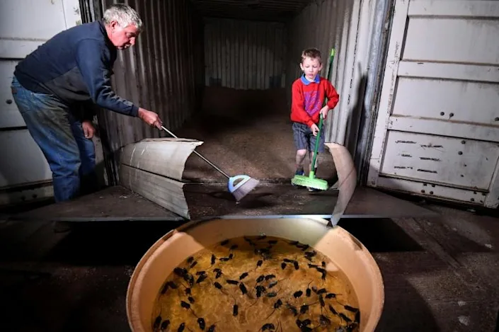 After fire and floods, Aussie farmers suffer devastating mouse plague