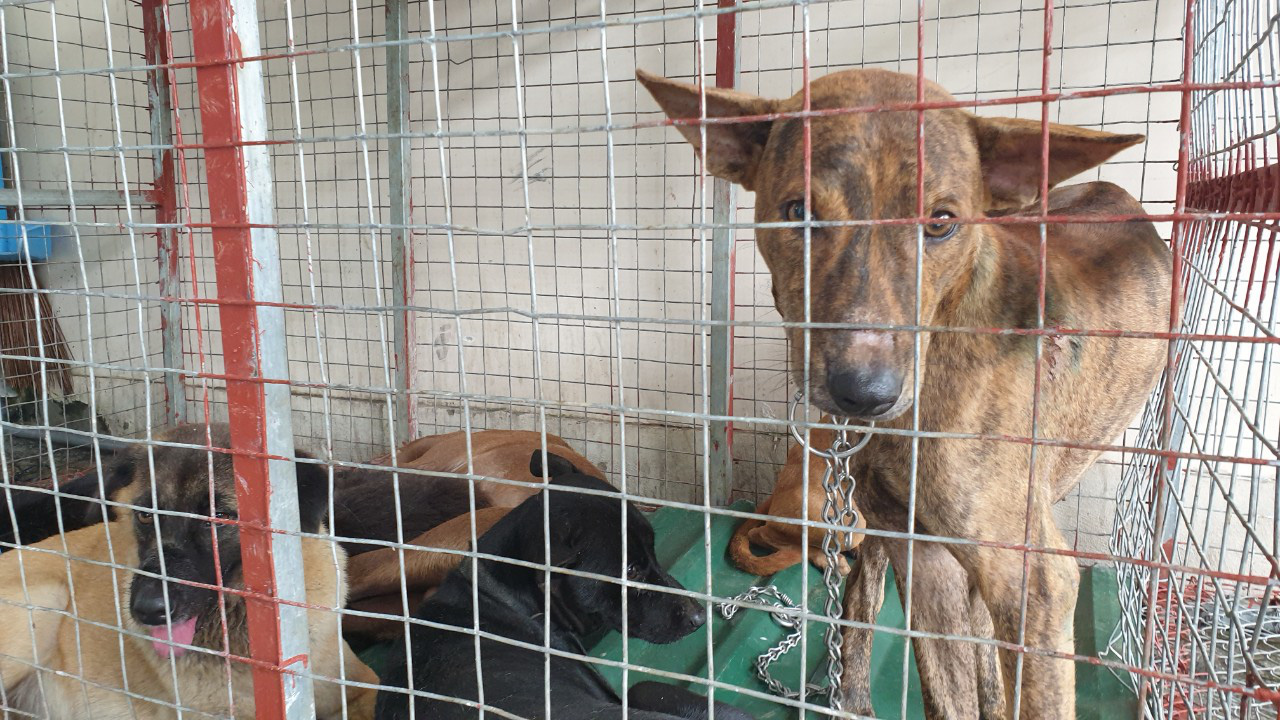 Vietnam police use social media to help reunite stolen dogs with owners