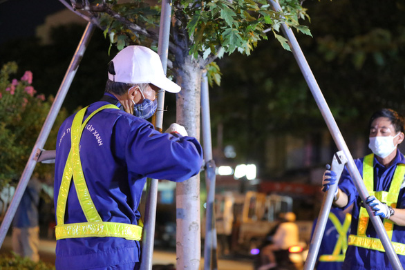 Urban landscape workers remove scaffolding surrounding a red maple tree on Nguyen Chi Thanh Street, Hanoi, Vietnam in this picture taken in the evening of June 19, 2021. Photo: N. Nhung / Tuoi Tre