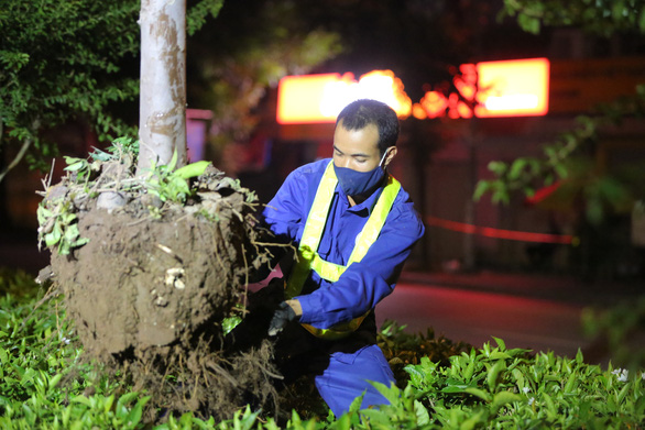 Hanoi uproots red maple trees for special care during summer heat