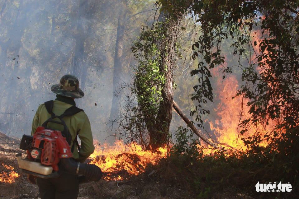 Central Vietnamese province tackles large forest fires