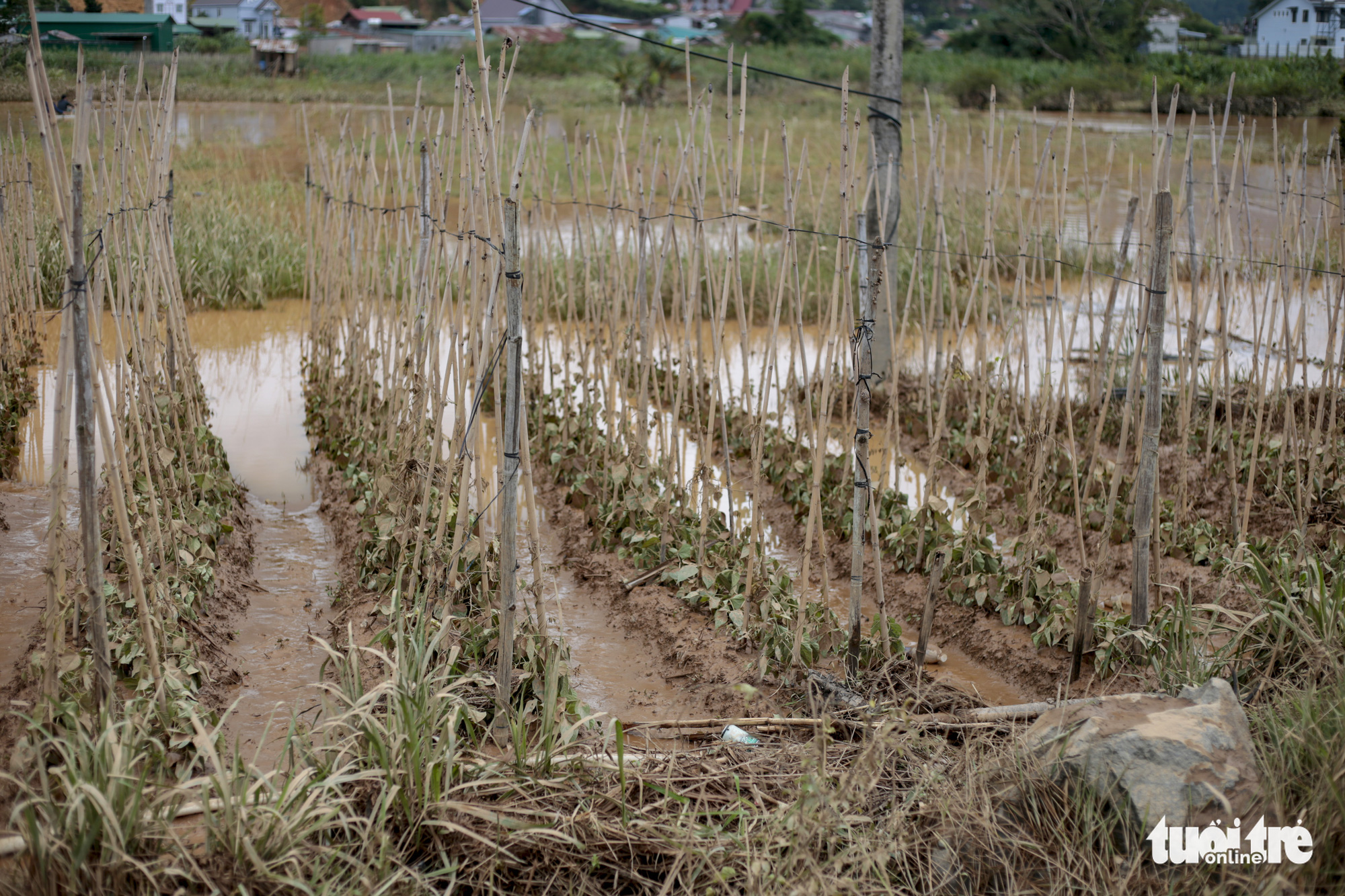Rising water floods areas growing vegetables in Duc Trong District, Lam Dong Province, Vietnam, July 9, 2021. Photo: M. Vinh / Tuoi Tre