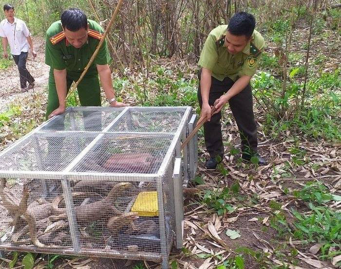 Vietnamese women fined over $44,000 for illegally buying endangered Bengal monitors