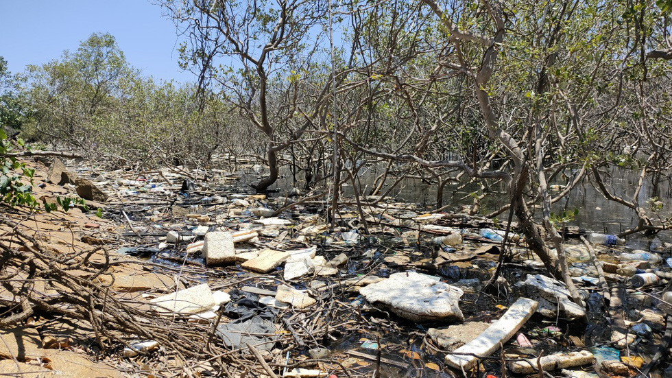 A swath of mangrove forest in Tam Giang Commune of the central Quang Nam Province is strewn with trash. Photo: Duc Tai / Tuoi Tre