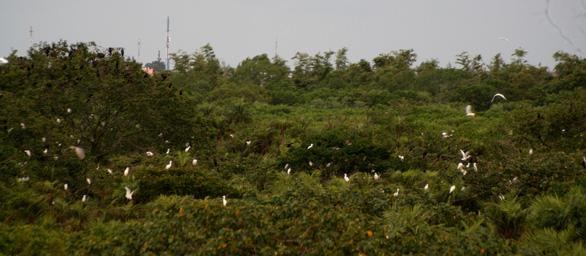 Le Danh Cuong helps to restore the famous Bac Lieu bird enclosure in Bac Lieu Province. Photo: Tien Trinh / Tuoi Tre