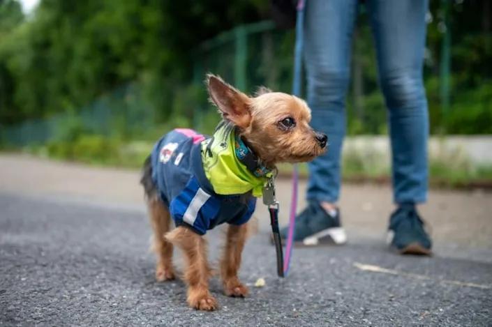 Tokyo's real life Paw Patrol keeps crime on short leash