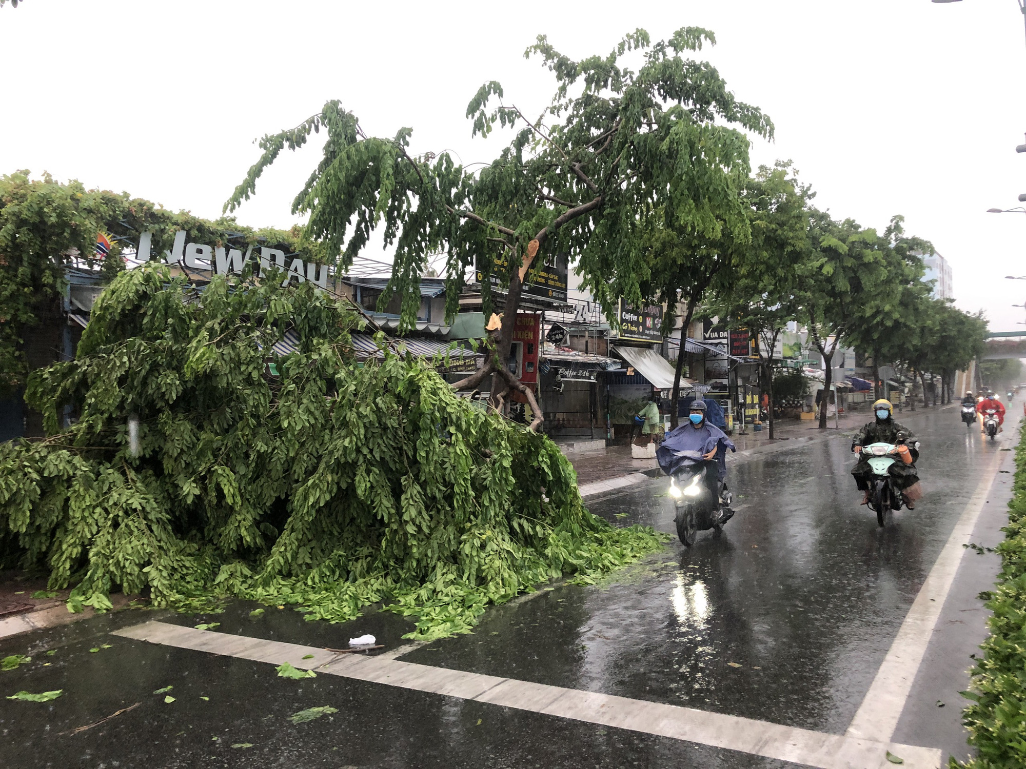 A tree is uprooted during a heavy rain on Pham Van Dong Street in Binh Thanh District, Ho Chi Minh City, July 19, 2021. Photo: Chau Tuan / Tuoi Tre