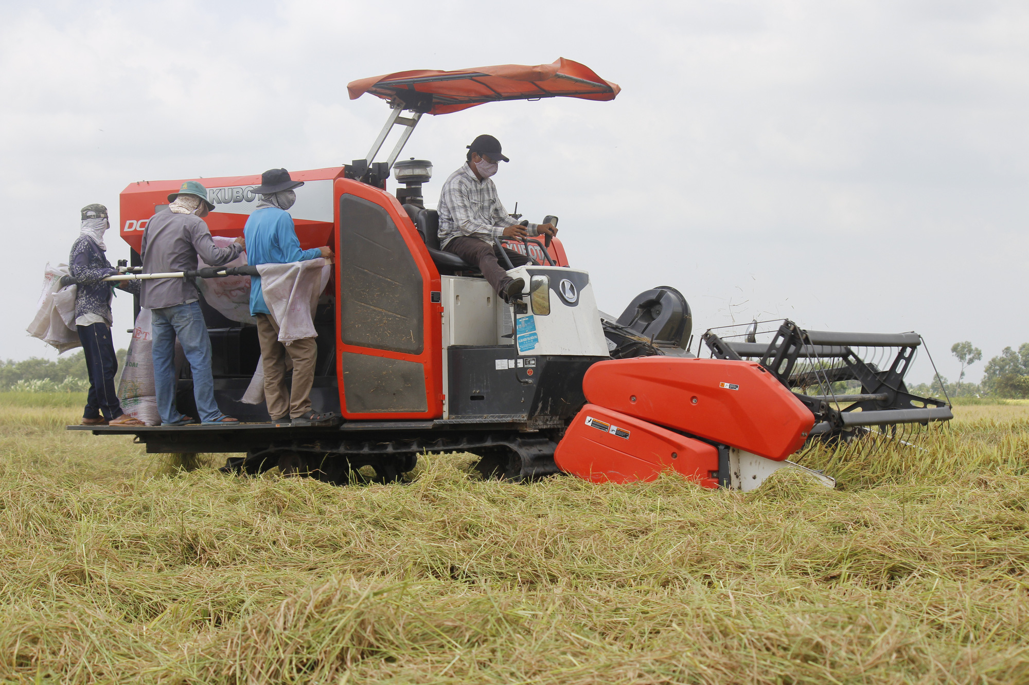 Vietnam province requires harvesters to test negative for COVID-19