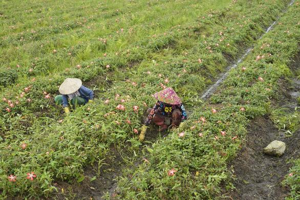 Vietnamese men leave big city for green deserted land in hometown