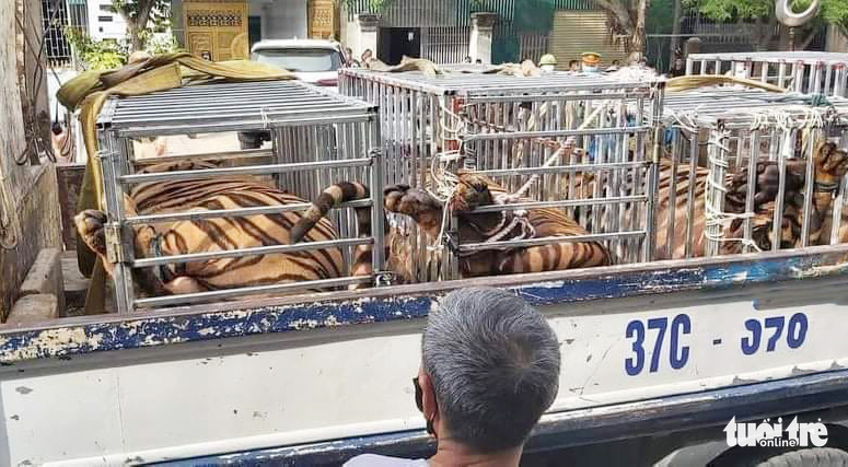 Police discover 15 tigers at resident's house in north-central Vietnam
