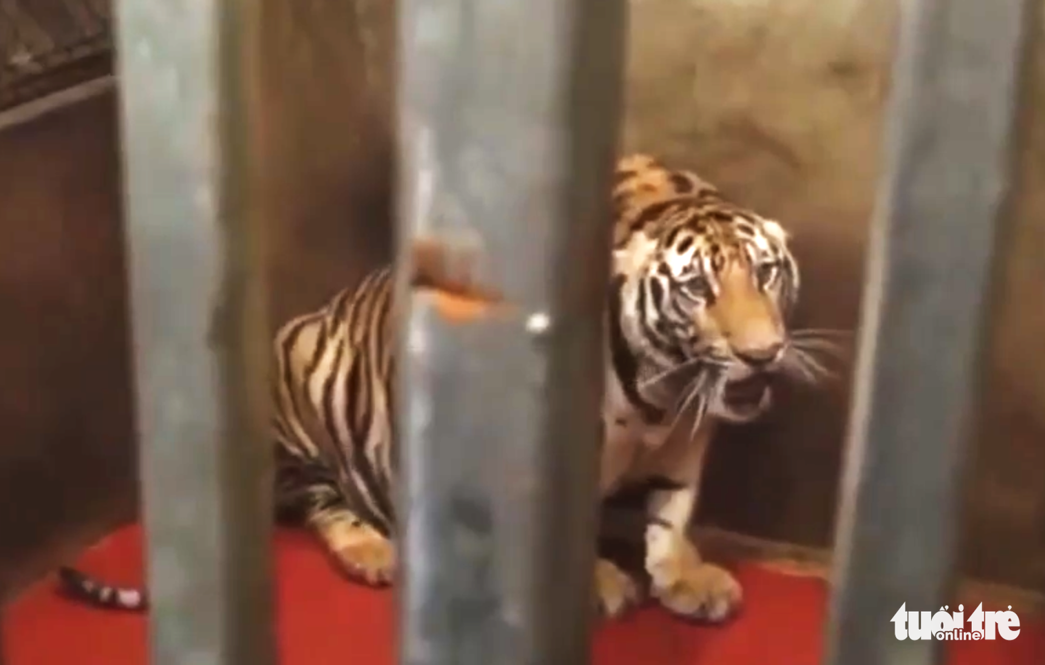 Residents turn homes into illegal tiger farms in north-central Vietnam