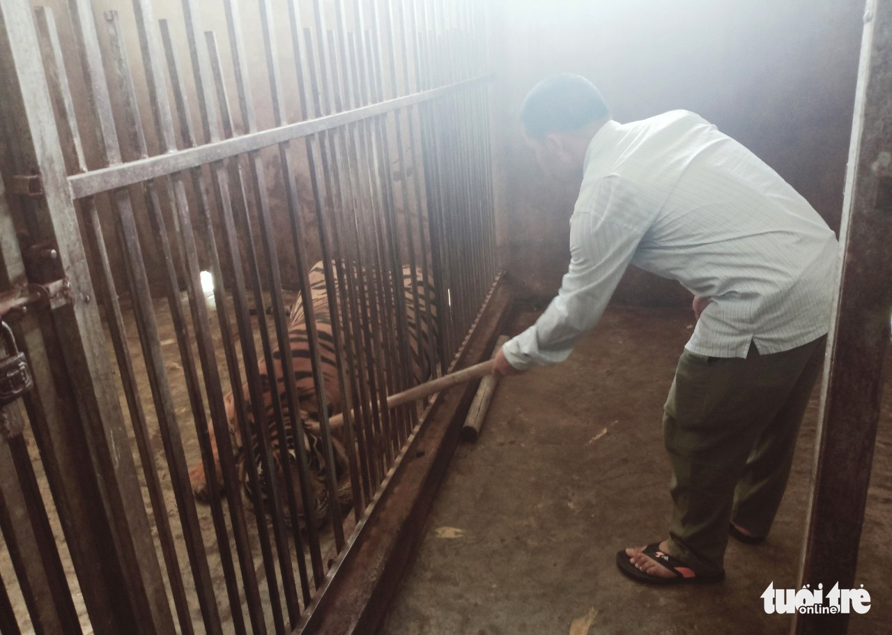 Two residents nabbed for raising tigers illegally in north-central Vietnam
