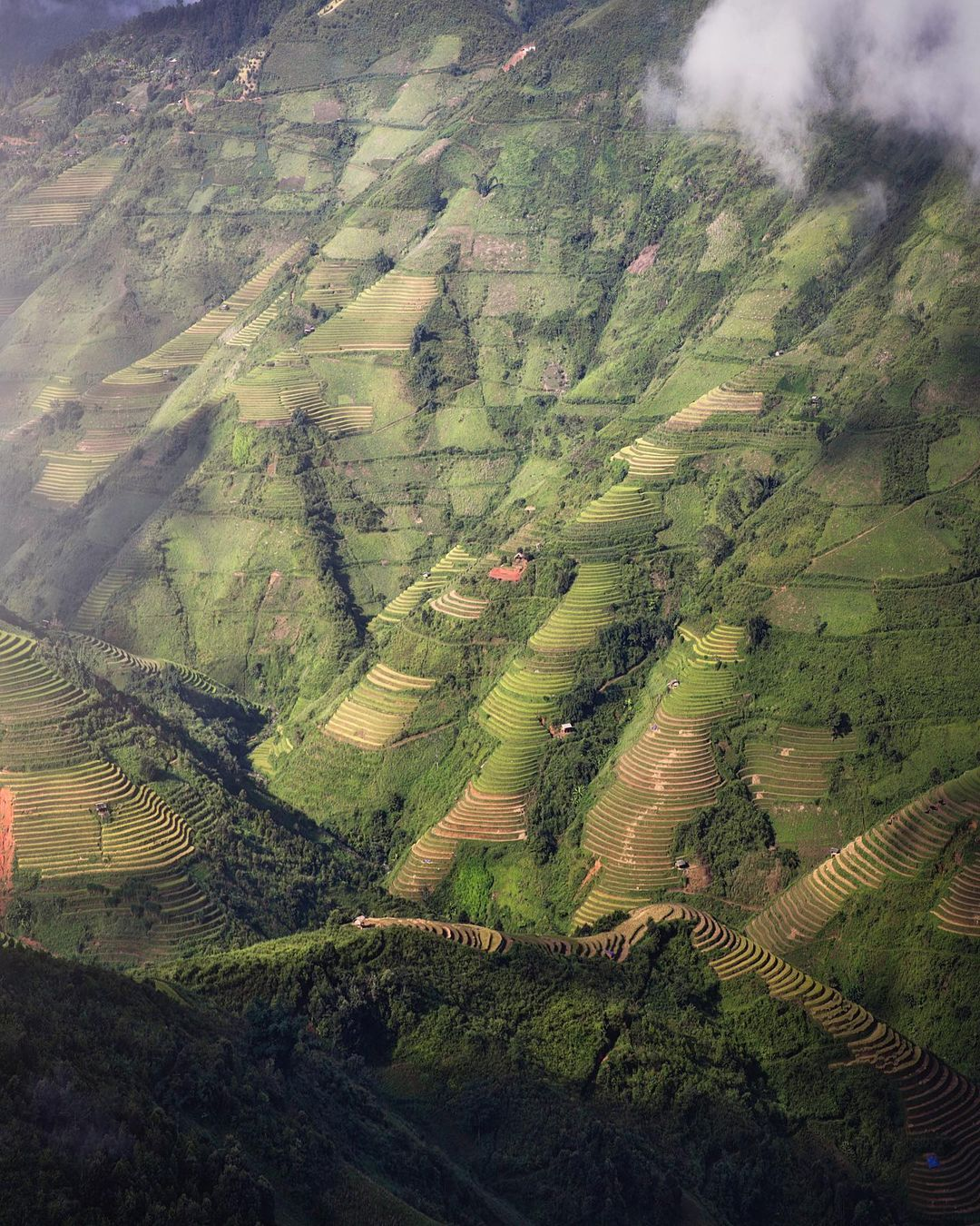Rice terraces in Mu Cang Chai captured by Indra