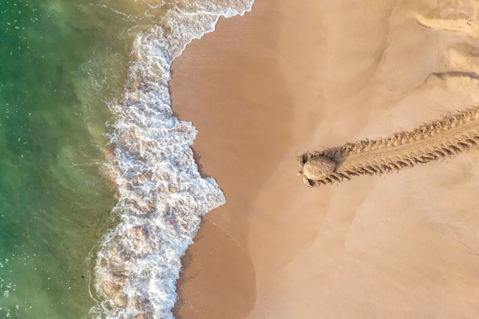 'Back to Adventure' by Qasim Al Farsi, winner of the Wildlife category at the 2021 Drone Photo Awards