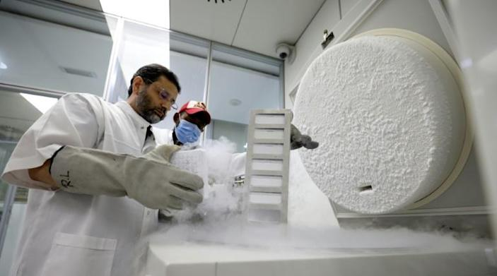 Dr. Nisar Ahmad Wani, Scientific Director of the Reproductive Biotechnology Center, checks on frozen samples at the center's laboratory in Dubai on June 4, 2021. Photo: AFP