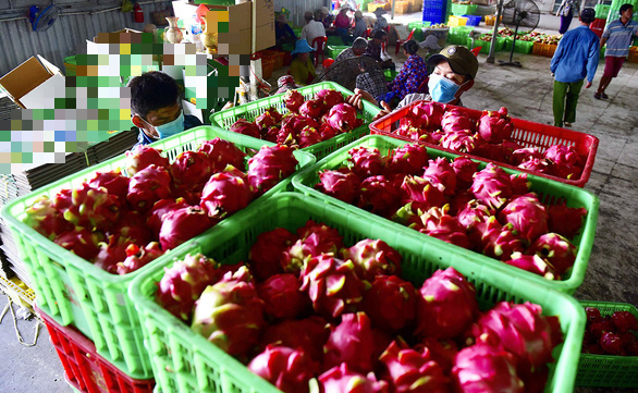China suspends dragon fruit imports through Vietnam's northern border gate after discovering coronavirus on shipment