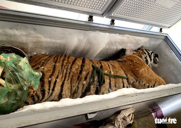 Vietnam police investigate man after finding dead tiger in freezer at his house
