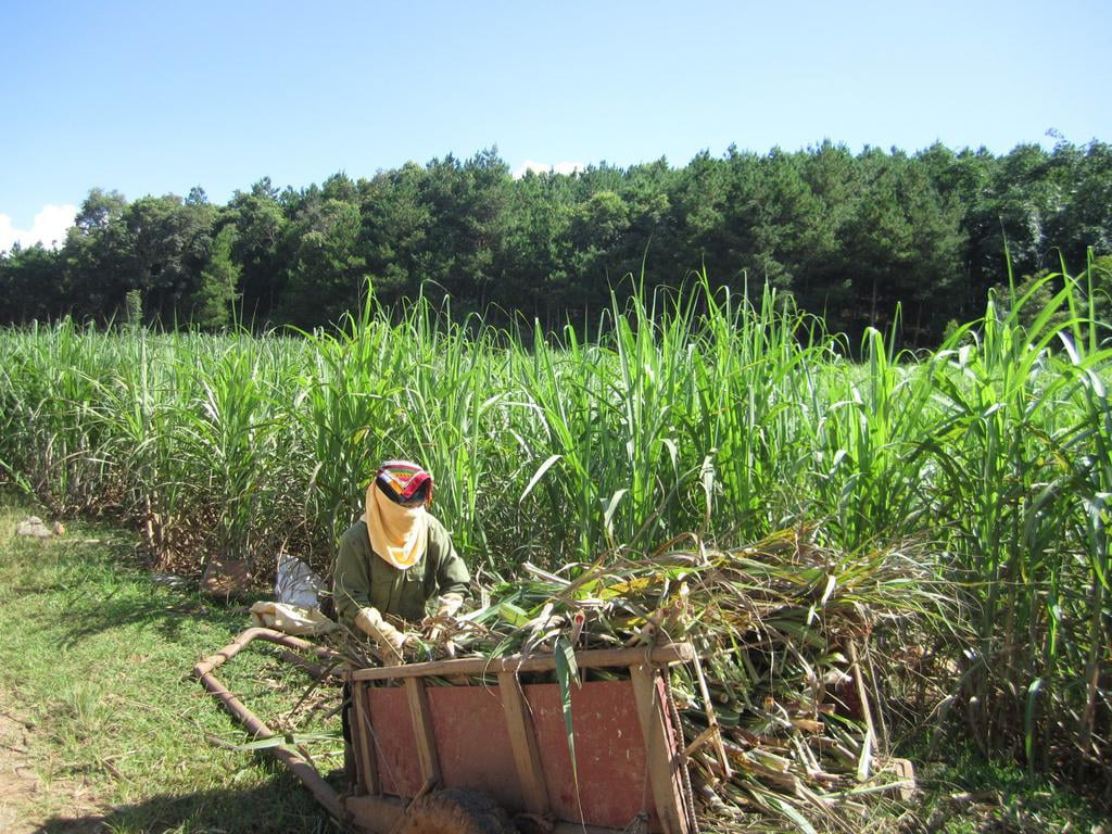 Vietnam investigates trade remedy evasion by imported cane sugar