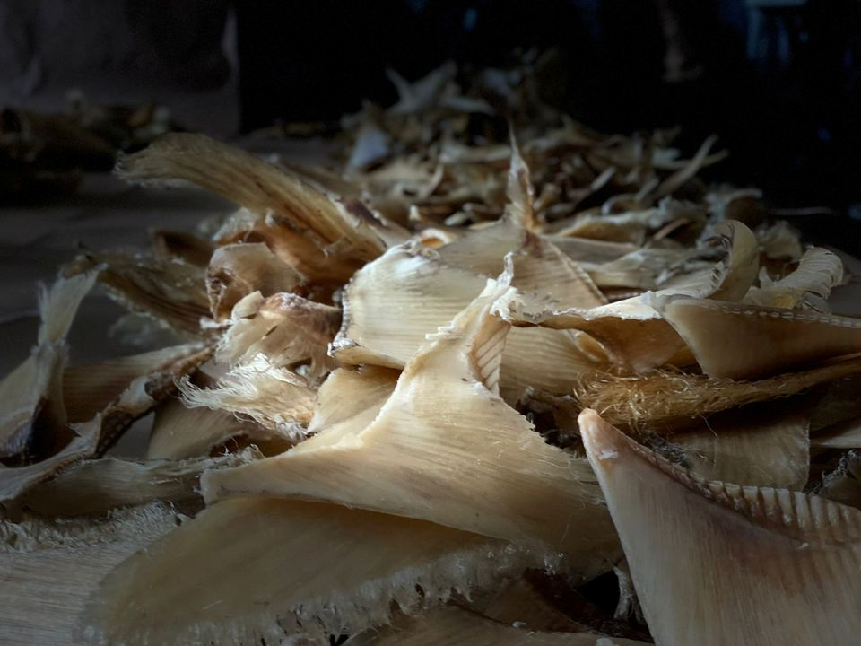Colombia confiscates nearly 3,500 shark fins on their way to Hong Kong