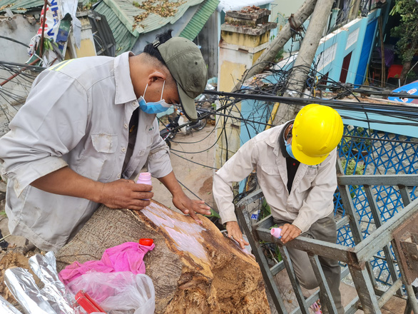 Workers use glue to dress the wound of the 200-year-old banyan tree in Quang Ngai City. Photo: Tran Mai / Tuoi Tre