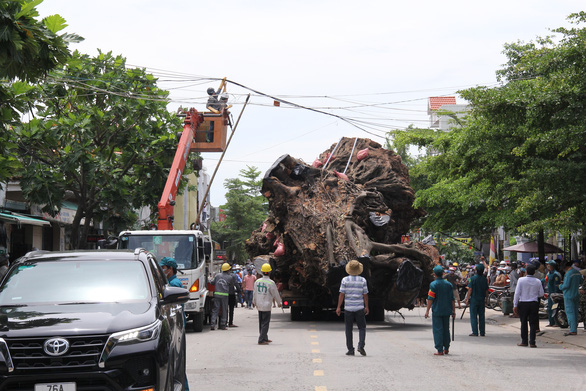 Workers lift hanging cables to make way for the 200-year-old banyan tree to leave downtown Quang Ngai City, Quang Ngai Province, Vietnam, September 25, 2021. Photo: Tran Mai / Tuoi Tre