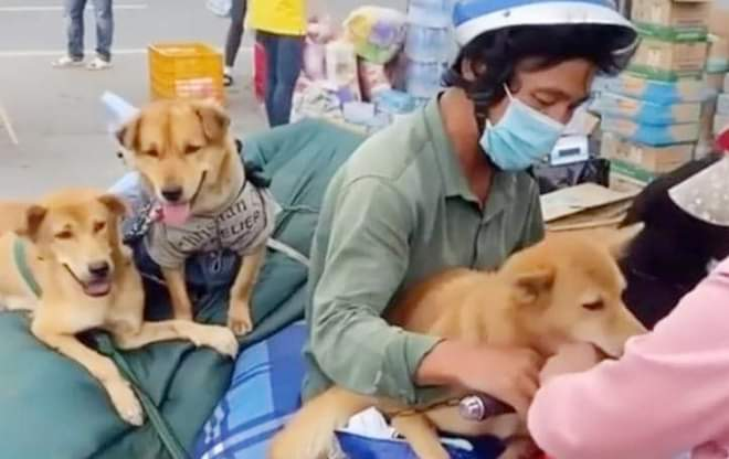 Public uproar provoked as 13 dogs culled after owners test positive for COVID-19 in Vietnam's Mekong Delta