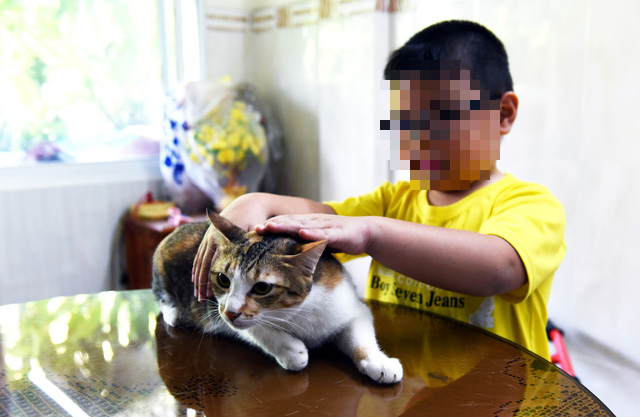 How does Ho Chi Minh City deal with pets of COVID-19 patients?