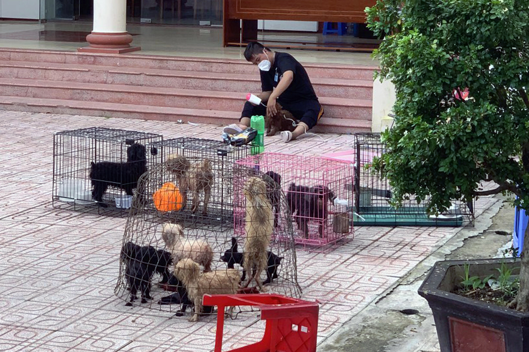 Vietnamese ward authorities provide temporary care for 12 dogs while owners receive COVID-19 treatment